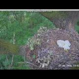 【自然怖すぎ】仲良く一緒に寝ていた3羽のヒナのうち2羽が一瞬にしてさらわれる映像