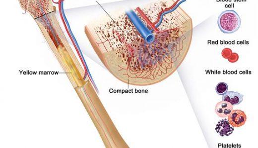 一次リンパ器官と二次リンパ器官-骨髄 胸腺 リンパ節 脾臓 リンパ組織-