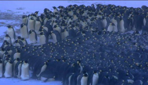 ペンギンは立ったまま寝る?横になって寝る?
