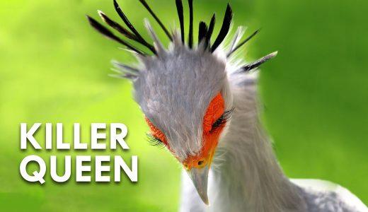 「地球上で最も美しい鳥」と言われるヘビクイワシが神々しすぎる