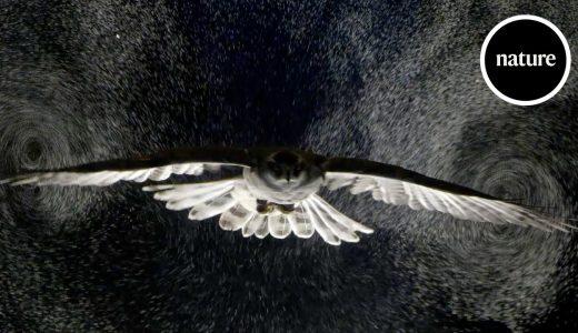 フクロウの飛行によって生じる空気の流れを可視化してみた