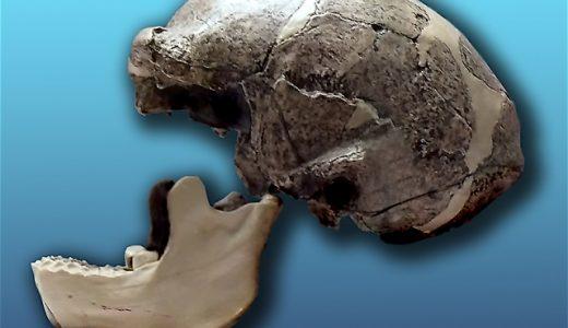 多地域進化説と出アフリカ説(アフリカ単一起源説)の違いとは