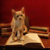 気軽に読めて楽しめる!おもしろいおすすめ生物本まとめ