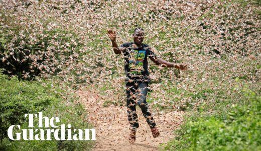 【COVID-19】コロナウィルスパンデミックの中でのイナゴによる蝗害がやばすぎる