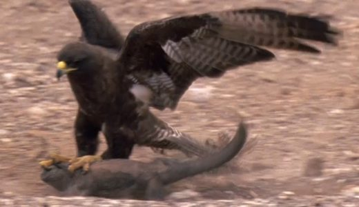 自然の摂理!様々な野生動物が狩りをする瞬間を記録した映像