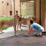 【1000万再生】動物園でライオンと存分に遊ぶ方法