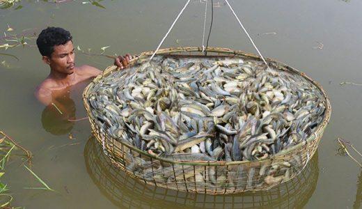 【サムネ詐欺】超原始的な罠で魚を捕まえてみた動画