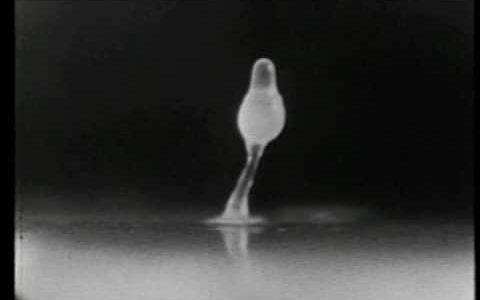 細胞性粘菌・変形菌類・卵菌の違い
