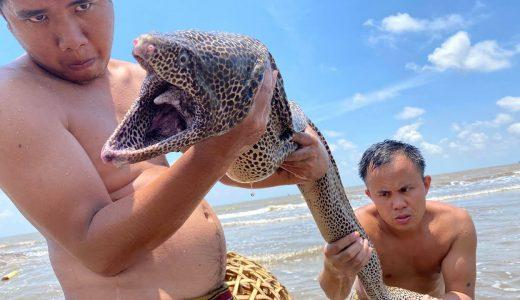 大きな籠を海に沈めて待っていたら巨大なウツボが捕れた映像