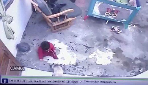 危ない!!幼児が階段から落ちるのを全力をもって阻止するネコの映像