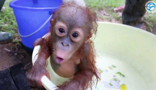 霊長類の赤ちゃんが抱きしめたくなるかわいさ!!映像をまとめてみた