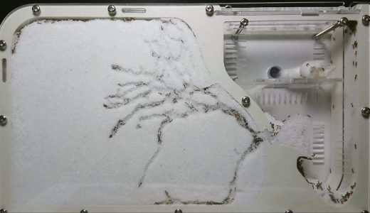 【400万再生】28時間でアリはどれくらいの巣を構築することができるかを実験した映像