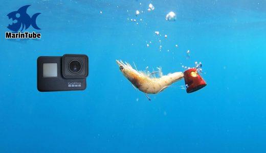 水深70mの海にGoProとエビを落として撮影してみた映像