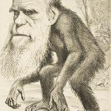 進化論の変遷まとめ