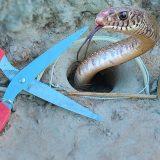 ハサミを使ってヘビを捕獲するトラップをDIYしてみた動画