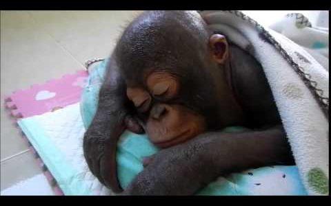 リラックスしすぎ!!寝ている動物たちの姿がかわいすぎる!【動画まとめ】