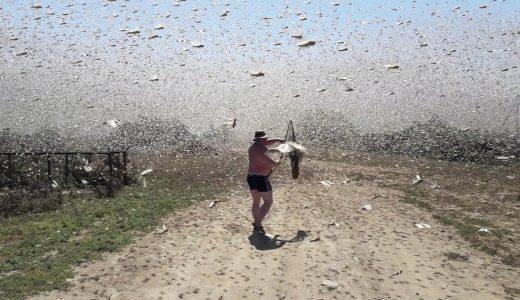 【閲覧注意】虫が大量に集まりウジャウジャしている映像【動画まとめ】