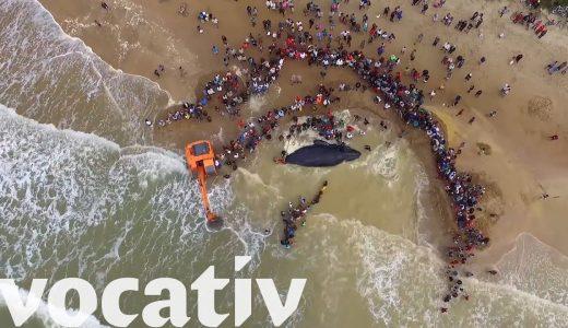 【感動】ヒトが巨大な海の生き物を助ける映像がハートフル!【動画まとめ】
