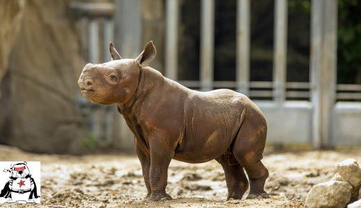 【胸キュン注意】こどもの時は可愛かった!!大型動物の赤ちゃんたち