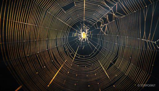 【閲覧注意】蜘蛛の巣の作り方まとめ