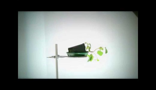 重力屈性と光屈性はどちらが強いのか?植物が戸惑うのを堪能する映像