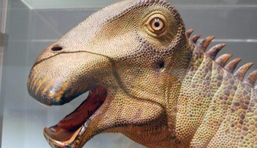 【変な歯】歯があり得ない進化を遂げた動物たちまとめ