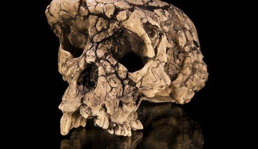 最古の人類「サヘラントロプス」とは?