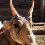 【変な鼻】奇妙な進化を遂げたおもしろい鼻を持つ動物たちをまとめてみた!