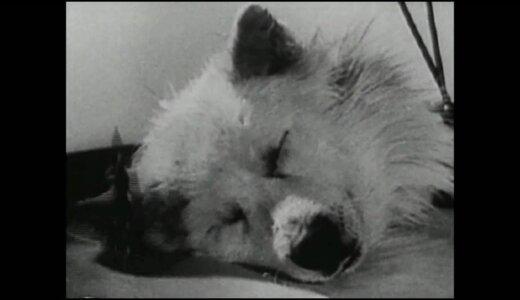 【閲覧注意】セルゲイ・ブルコネンコの犬の頭部だけを生かすという実験がヤバすぎる