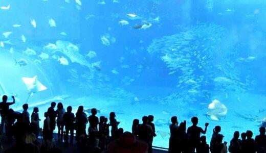 【夏休みの恐怖の思い出】水族館の巨大な魚が水槽にぶつかり死亡【閲覧注意】