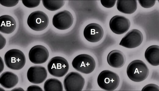 違う型の血液を混ぜるとどうなる??A型とB型の血液を混ぜた映像