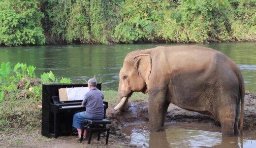 何としてもゾウにピアノを聴かせたいYOUTUBERの努力がすごい!