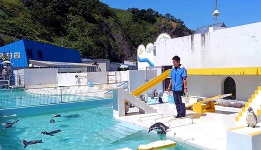 【動画】言うことを効かないペンギンショーが面白過ぎる!!【小樽水族館】