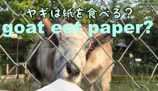 ヤギに紙をあげたら食べるって本当?