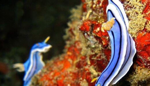 ウミウシは貝の仲間なの?