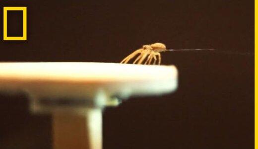 クモは糸を使って空を飛ぶことができる