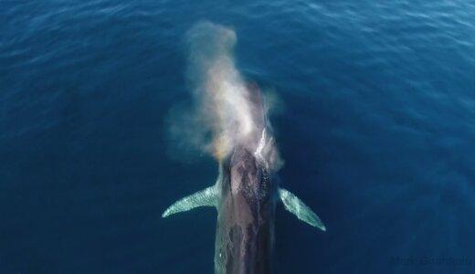 クジラが噴くのは潮ではなく息