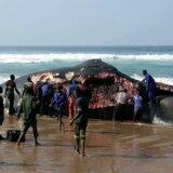 【閲覧注意】浜に打ち上げられたザトウクジラの死骸、現地の人々のごはんとなる