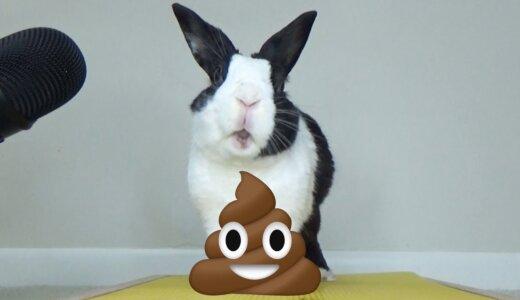 ウサギのウンコは2種類あって、ビタミンたっぷりのウンコ(盲腸便)をウサギは食べる