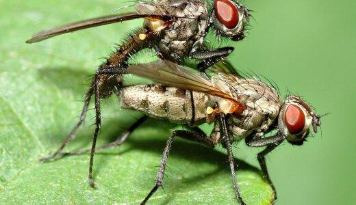 ハエは4枚の翅があったが、後ろ翅は退化してめちゃくちゃ小さい