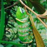 体表のブツブツ模様がやばい!!シャチホコガ科の一種「Naprepa houla」