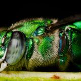 全身メタリック!エメラルドグリーンに輝くジャングルの鉱物「フレンチギアナ」
