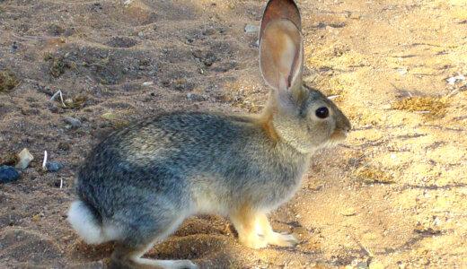 ウサギは一人で寂しくても死なない