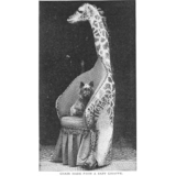 【画像】19世紀に本物の動物たちを使って作られた家具たち