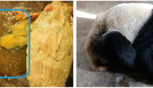 パンダは数週間に一度「白いウンコ」を苦しそうに出す