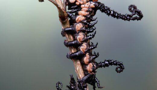 度肝を抜くほどおもしろくて変な昆虫たち20選【まとめ】