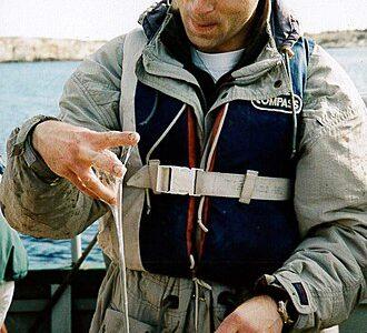 海の鼻水??鼻水みたいな粘液を大量に放出するヤツ「植物プランクトン」