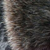 哺乳類で毛の密度が一番高い動物は「ラッコ」