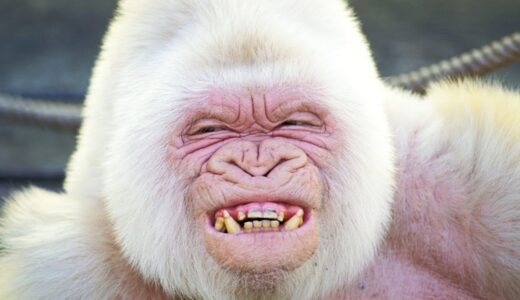 【画像】神々しすぎるアルビノ・白変種の動物たち25選【まとめ】