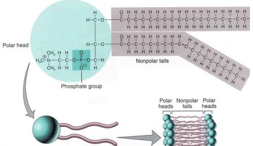 細胞膜の構造と物質の輸送(受動輸送・能動輸送)